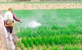 Confederation allows imported Vegetables with Toxic Pesticides