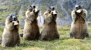 The Marmot and its Precious Oil
